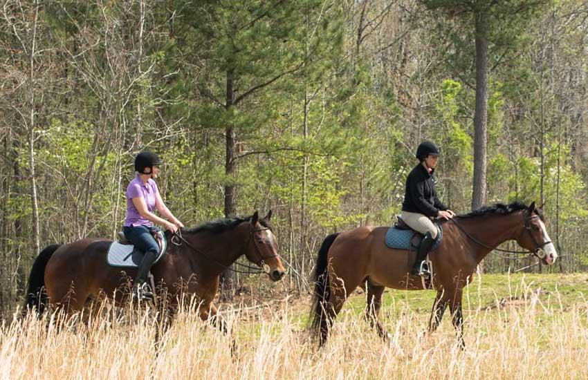 horses close
